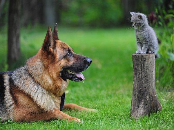 Мастометрин для кошек - инструкция по применению