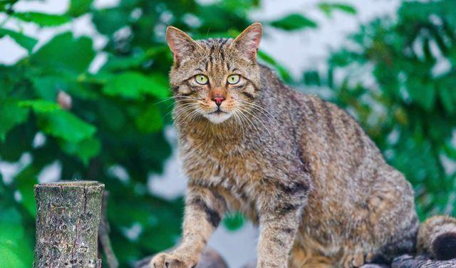 Как определить возраст кошки - 6 методов