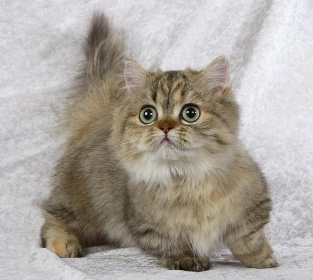 Корнам для кошек: инструкция по применению