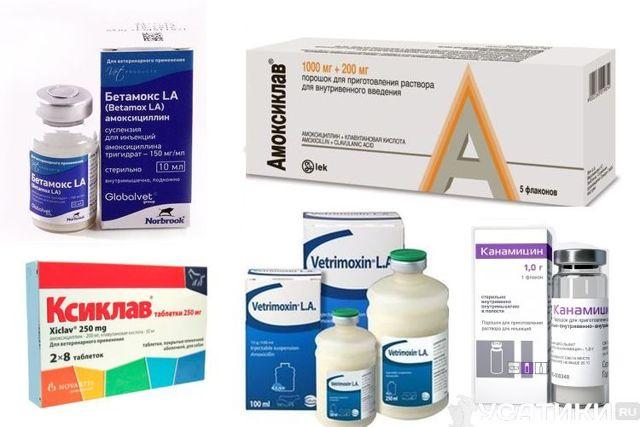 Антибиотики для кошек - классификация, когда можно давать