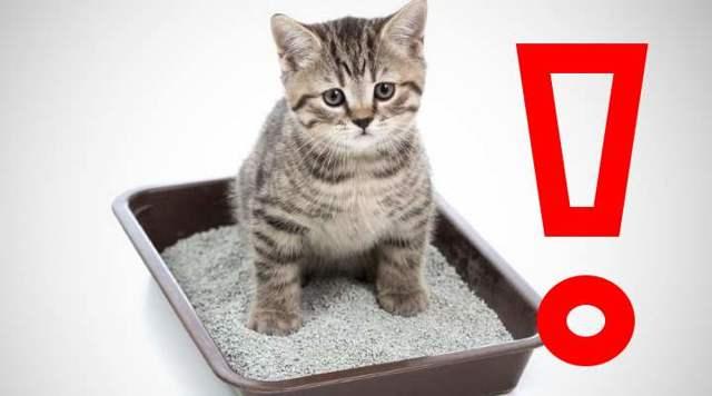 6 причин почему у котенка жидкий стул - симптомы и лечение