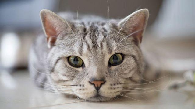 Кошка тянет задние лапы: почему и что делать