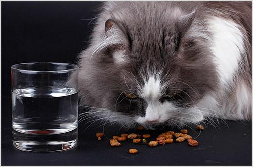 Правильное кормление кота - как и чем кормить