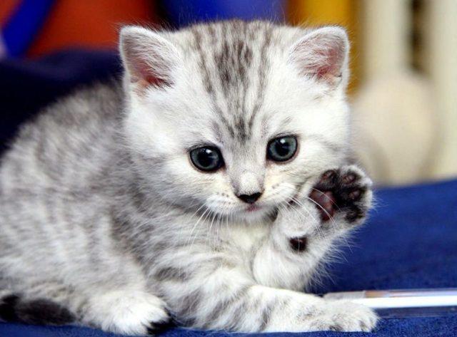 Мультифел 4 для кошек - инструкция по применению