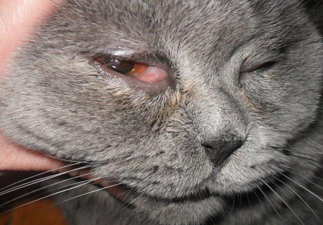 Тобрекс для кошек: инструкция по применению