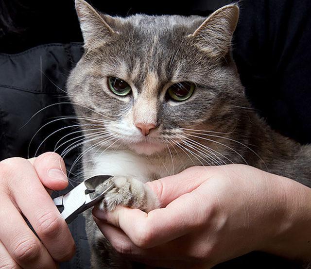 Сколько стоит удаление когтей у кошек