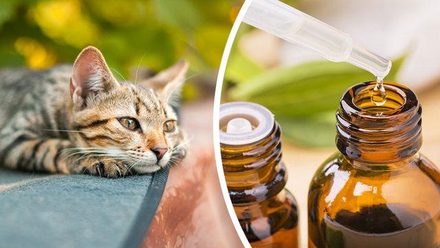 Какой запах не любят кошки - список ароматов?